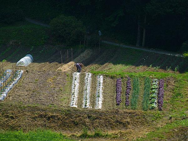 Une ferme au Japon indépendante énergétiquement, photo de Marc Duployer